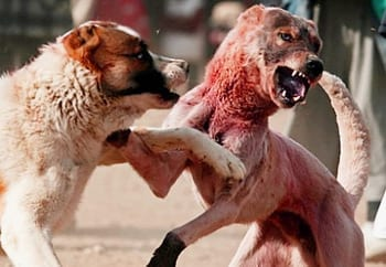 Animal Blood Sport in Islam