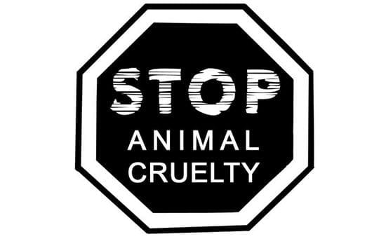 Cruelty to Animals in Islam